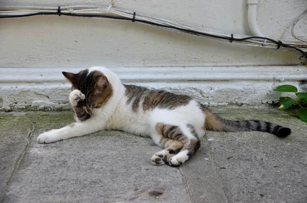 頭を抱えるヘミングウェイ猫 6-8-19