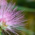 Pink Powder Puff II 7-20-19