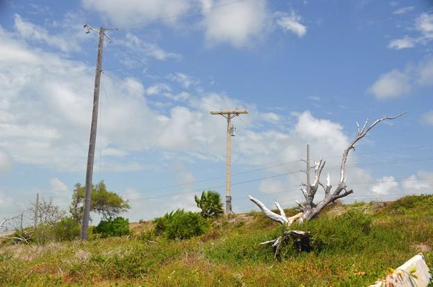 Photos: Driftwood 6-9-19