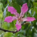 Silk Floss Tree I 10-7-19