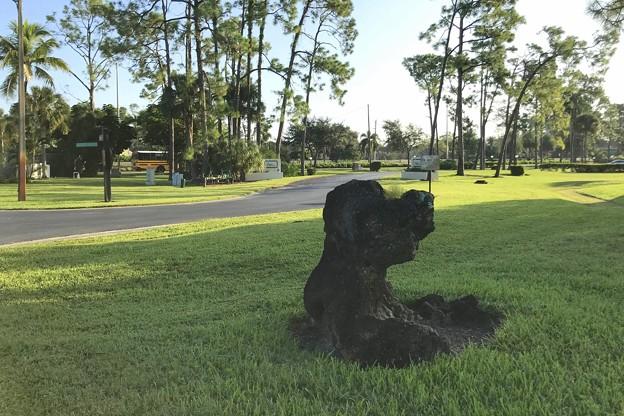 Photos: Puppy 9-18-19
