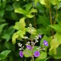 Blue Flowers 11-27-18