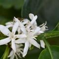 Photos: White Flowers 3-30-19