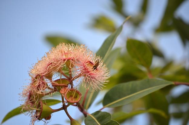A Bee 10-7-020