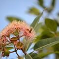 Photos: A Bee 10-7-020
