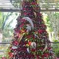 Photos: Botanical Garden Christmas Tree 2019