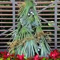 Photos: Palm Christmas Tree 12-10-19