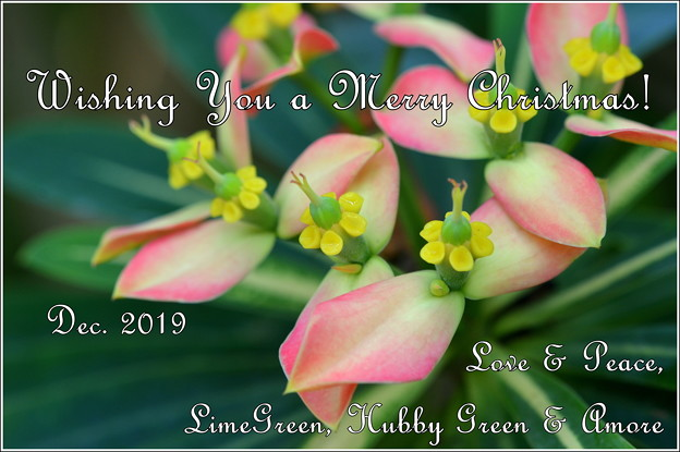 Xmas Card for Kura and Blog Friends 2019