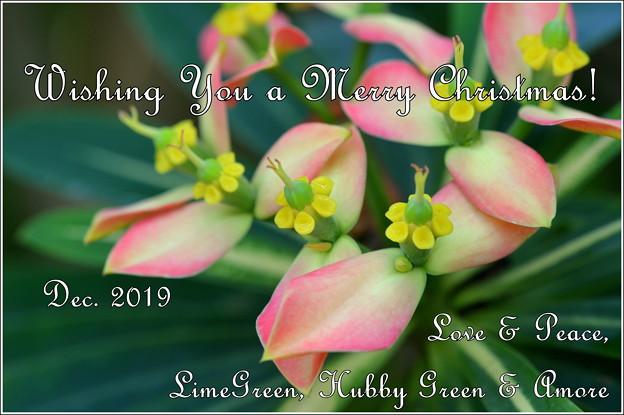 Xmas Card for Kura and Blog Friends 2019