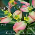 Photos: Xmas Card for Kura and Blog Friends 2019