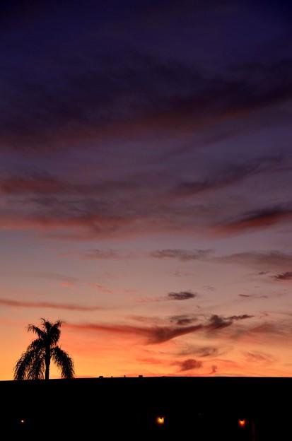 Palm Tree 11-18-19