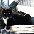 Photos: A Reclining Cat 11-27-19