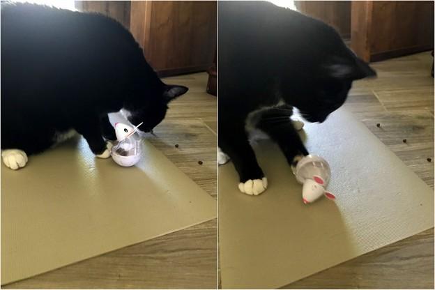 (参考)おもちゃのネズミの遊び方