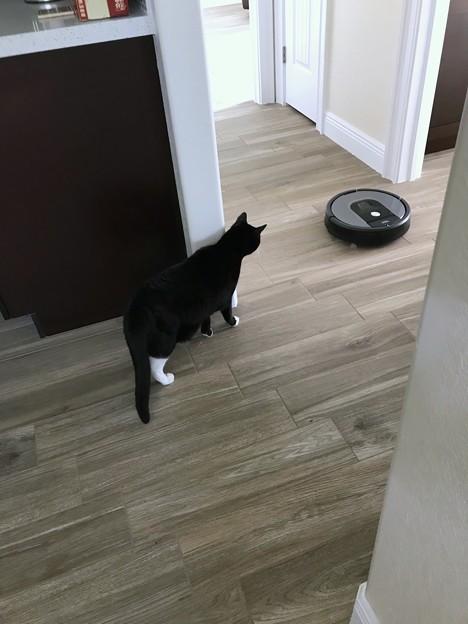A New Housekeeper Alice 1-14-20