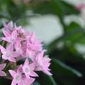 Photos: Planter Box 12-28-19