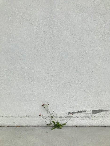 Wall Flowers 1-31-20