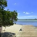 Photos: Lemon Bay 3-8-20