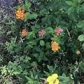 Potpourri of Wild Plants 3-24-20