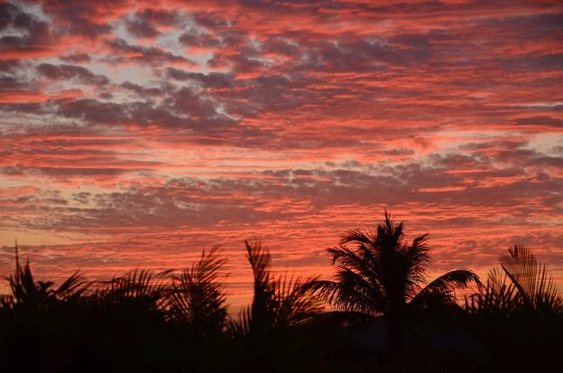 Photos: Windy Palms 5-13-20