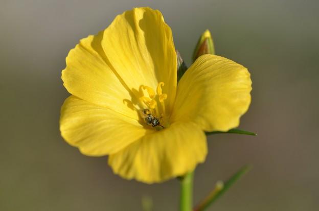 Pollination 5-6-20