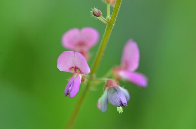 Little Pink I 5-30-20
