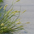 The Morning Grass 6-14-20