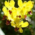 Bright Yellow 6-25-20