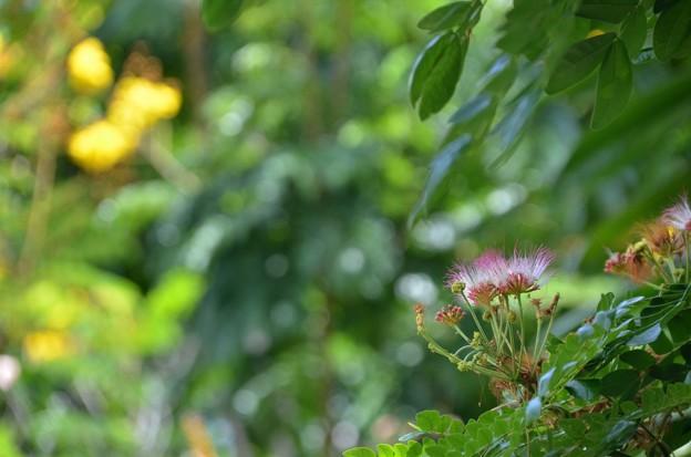 Monkeypod 6-25-20