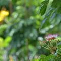 Photos: Monkeypod 6-25-20