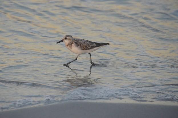 Photos: Wading 9-2-20