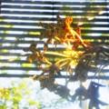 Photos: Tiger Orchid 9-20-20