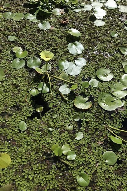Waterpoppy II 9-20-20