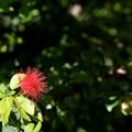 Photos: Red Powderpuff 9-20-20