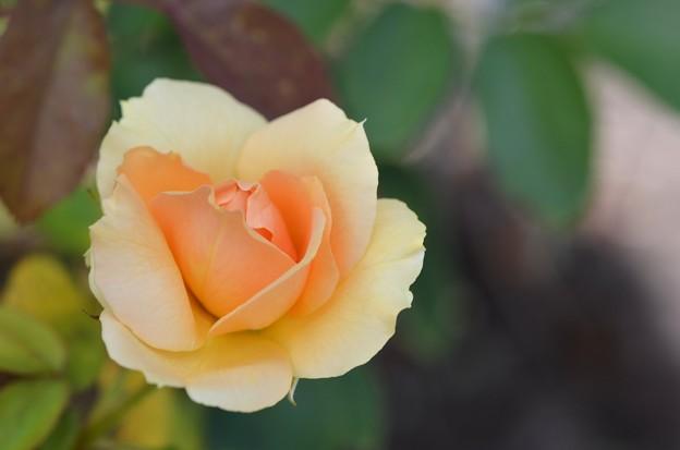 Rosa Soul Sister Sunbelt 9-20-20