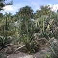 Succulent Garden 9-20-20