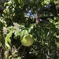 Photos: Dendrobium on Carabash 9-20-20