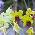 Orchid Bouquet 9-20-20