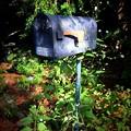 Photos: Mailbox 10-9-20