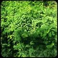 Leaves 10-9-20