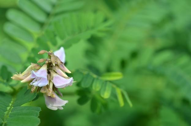 Photos: Rosary Pea I 10-9-20
