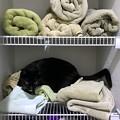 Photos: Bad Kitty 10-31-20