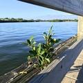 Photos: Mangrove 11-26-20