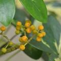 Photos: Yellow Fruits 11-15-20