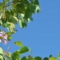 Blue Sky 11-29-20