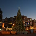 Photos: Punta Gorda Christmas Tree III 12-9-20