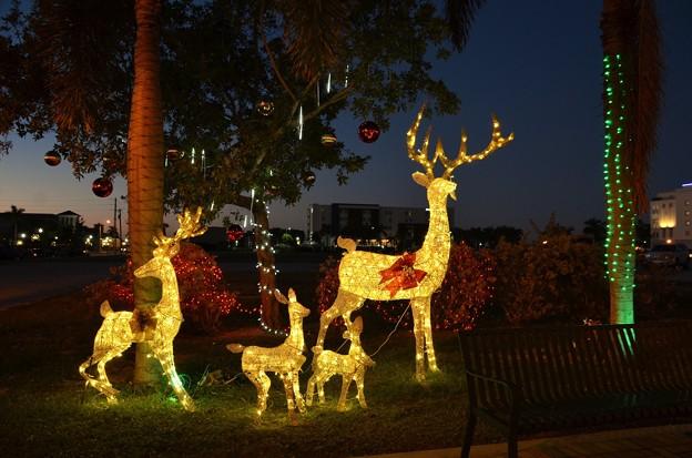 Reindeer 12-9-20