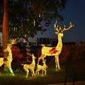 Photos: Reindeer 12-9-20