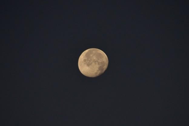 Photos: New Year Moon 1-1-21