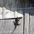 Black Iguana 12-31-20