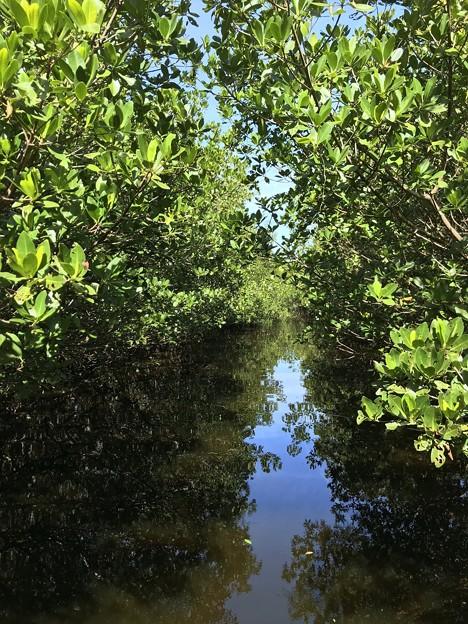 Mangroves I 1-20-21